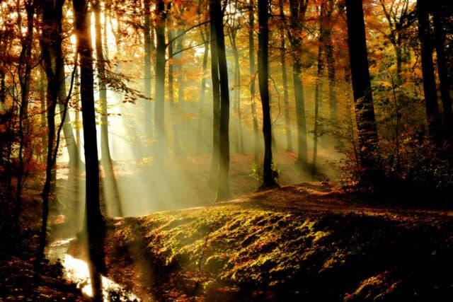 light shining through trees in autumn
